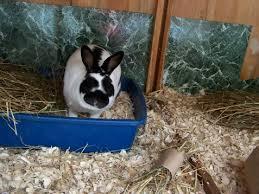 best bedding for rabbits 6 june 2015 pet blog veterinary tips