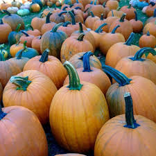 Pumpkin Patch Half Moon Bay by Best Pumpkin Picking Near Me 2017 U2013 Where To Pick Your Own