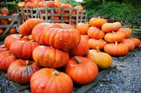 Pumpkin Patch Las Cruces 2015 by Pumpkin Patch Fun It U0027s That Time Of The Year For More Than