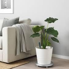 chilipulver feuchtigkeitssensor für pflanzen grün ikea