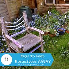 11 Ways To Keep Mosquitoes Away - From Under A Palm Tree 15 Backyard Tiki Torches Torches Citronella Oil And How To Get Rid Of Mosquitoes Mosquito Magnet The Best Ways To Of Naturally Beat The Bite Backyard Mosquitoes Research 6 Plants Keep Bugs Away Living Spaces Creepy 10 Herbs That Repel Bug Zapper Plant Lemongrass As A Natural Way Keep Away Pure 29 Best Images On Pinterest Weird Yet Effective Pest Hacks Thermacell Repellent Patio Lanternmr9w Home Depot 7 Easy Mquitos Dc Squad