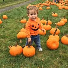 Pumpkin Picking Riverhead by Your Fall Fun Photos Newsday