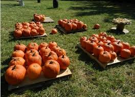 Pumpkin Patch Church Wilmington Nc by 88 Best Lumberton Nc Images On Pinterest Native Americans