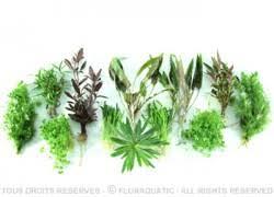 lot de plantes économique floraquatic