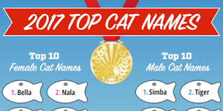 popular cat names top cat names of 2017 infographic find cat names