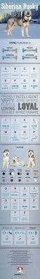 Siberian Husky: Costs & Facts (Infographic + Ultimate Guide) Cloud Nine Dog Traing Best Houses In 2017 For Both Indoor And Outdoor Use Siberian Husky Costs Facts Infographic Ultimate Guide Farmer Tag Wallpapers Country Children Tractor Fields Farm Dogs Plastic Dog Barnhome Kennel Petshop Online 25 Food Bowls Ideas On Pinterest Project Food Cindee X Stackhouse Owyheestar Weimaraners News 614 Best Australian Cattle Images Blue Heelers 5 Facts About Dogs Deworming The Horse Owners Resource Lonely Escapes Yard To Get A Hug From His Friend Youtube Oakwood Park Morton6711