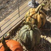 Pumpkin Farm Illinois Best by Heap U0027s Giant Pumpkin Farm 23 Photos U0026 26 Reviews Pumpkin