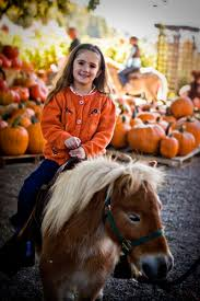 Minges Pumpkin Festival 2014 by 50 Best Pumpkin Patch Activities Images On Pinterest Pumpkins