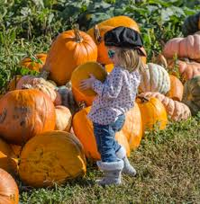 Snohomish County Pumpkin Patches by Bob U0027s Corn Maze U0026 Pumpkin Patch In Snohomish Washington N E Of