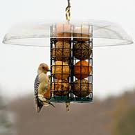 Duncraft Suet & Block Bird Feeders