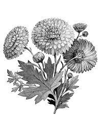Coloring Adult Vintage Flower Garden Clip Art Black And White