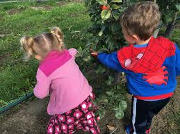 Best Pumpkin Patch Snohomish by Best Apple Picking Orchards In Washington State