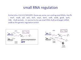 modification si鑒e social association the analysis of regulatory networking with non coding rna ppt