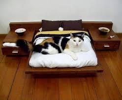maisons et jeux pour chats cat gatos and animaux
