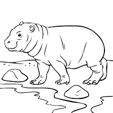 Pin Drawn Baby Animal Hippo 5