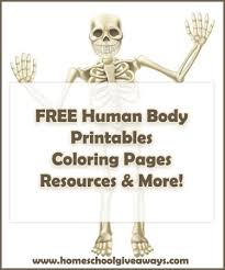 FREE Human Anatomy Printables You May Enjoy Coloring Pages Lapbooks Unit Studies