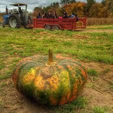 Pumpkin Patch Western Massachusetts by C N Smith Farm 56 Photos U0026 74 Reviews Farmers Market 325 S