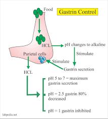 100 Ph Of 1 Gastrin Level Zollinger Ellison Syndrome Labpedianet