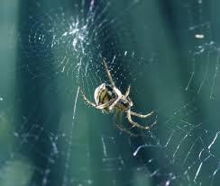 entomologie comment les araignées tissent leurs toiles
