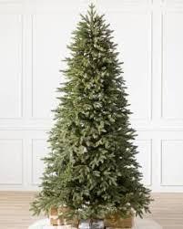 Stratford Spruce Tree 1