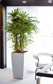 green home reloaded hydrokultur sorgt für ein grünes