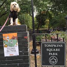 Tompkins Square Park Halloween Dog Parade 2017 by A Soy Bean The Fun U0026 Frustrating Tompkins Square Park Halloween