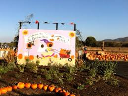 Pumpkin Patch Sf by 11 Bay Area Pumpkin Patches Mapped