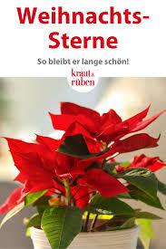 pin auf weihnachten traditionen deko rezepte