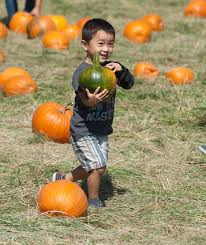 Ohio Pumpkin Festivals 2017 by Pumpkin Festival Cal Poly Pomona