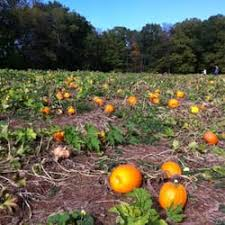 Pumpkin Patch Denver Pa by Penn Vermont Fruit Farm Fruits U0026 Veggies Rt 113 U0026 Rolling