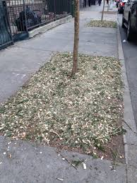 Christmas Tree Disposal Nyc 2015 by Recycling Christmas Trees For Myriad Uses Freshkills Park Alliance