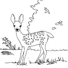 Coloring PageFawn Pages Fawn Deer Finding Food Page