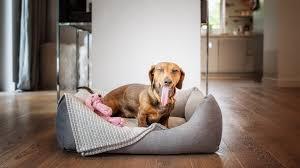 der hunde schlafplatz im winter lucka