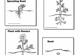 1st Grade Nature Coloring Pages Printables