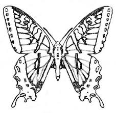 Swallowtail Butterfly Coloring Page Two Tailed Free Printable Pages Black Outstanding Kids