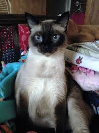 Lost Cat In Medford, Oregon, Please Help! / Krimeshare Cherry Picking Medfordmom Barnes And Noble Summer Reading Program 2017 Nobleunited Way Of Rock River Valley Holiday Book Drive Upcoming Events Caught Bread Handed Author Talk With Ellie Parks Archives In The Fall Jeffrey Lent 978021981 Amazoncom Books Scotty Gosson Exposed 82111 82811 Malden Public Library Adult Sponsored In Part By Classes Presentations Chris Highland Bruce Campbell On Twitter Ill Be Medford Or 1015 For My Jacksonvilles Chinese New Year Parade Holyoke Crossing Dsh Design Group