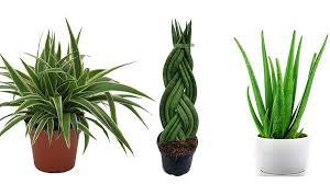 7 zimmerpflanzen für mehr sauerstoff besseres raumklima im