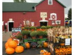 Toms Maze Pumpkin Farm pumpkin patches corn mazes fall festivals in the area orland