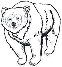 Drawn Grizzly Bear Cali 1