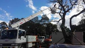Cherry Picker, Scissor Lift, Boom Truck & Lift Hire Sydney ... Lvo Ff614 4x4 Rigid Flat Truck Cw Cherry Picker 2 Man Lift 1992 Aerial Work Platform Wikipedia Cut Out Stock Images Pictures Alamy Ce Approved Mounted Articulated Diesel Electric Pickup Photo 61437959 Megapixl Pickers Mounted Hirail Cherry Picker Moves Between Jobs Wongms 15 Ton Type With Winch Crane Hoist 1000 Lb Illustrations And Cartoons Getty Nissan Cabstar Cte Z20e 20 Metre Vehicle 26m A26 Tj Truck Mounted Platform Blade Access