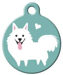 best 25 american eskimo dog ideas on pinterest american eskimo