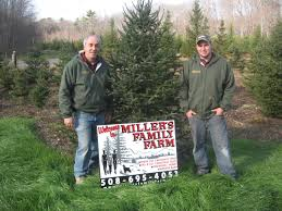 Fraser Christmas Tree Farm Ri by Miller U0027s Family Farm Now Growing Selling Trees On Allen Avenue