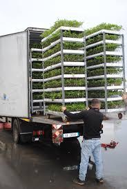 100 Seedling Truck Bruka Ltd