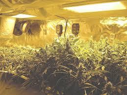 chambre culture complete chambre de culture cannabis complete best of chambre culture