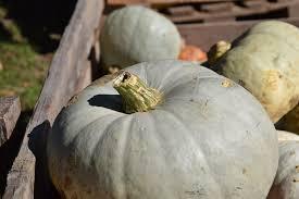 Pumpkin Gnocchi Recipe Nz by Love Food Waste