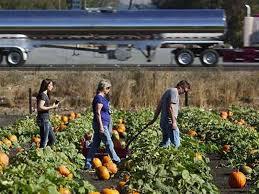 Petaluma Pumpkin Patch Corn Maze Map by New Lane On Highway 101 Ends Traffic Jams Near Petaluma Pumpkin Patch