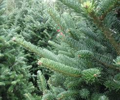 6ft Artificial Christmas Tree Bq by Christmas Trees B And Q Christmas Lights Decoration