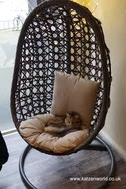 Cat Travel: Cat Cafe Stubentiger - The Coonies And The ...