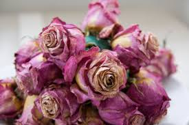 Ways To Make A Pumpkin Last Longer by How To Dry Flowers 5 Awesome Ways To Preserve A Bouquet