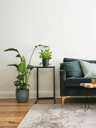 diese 5 großen zimmerpflanzen bringen leben in die bude